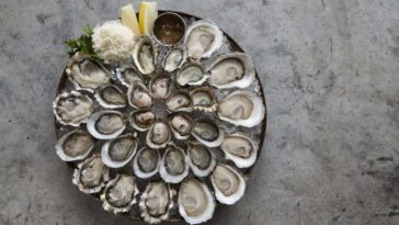 Taylor Shellfish Oysters_photo by Clare-Barboza